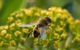 Thierry Cadalen, passionné des abeilles