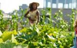 L'agriculture urbaine…c'est quoi?