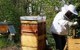 La récolte du miel: toute une technique