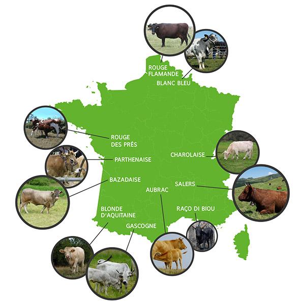 Vaches à viande : carte de France