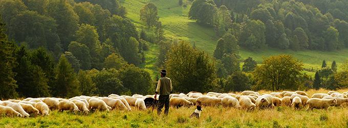 berger et troupeau