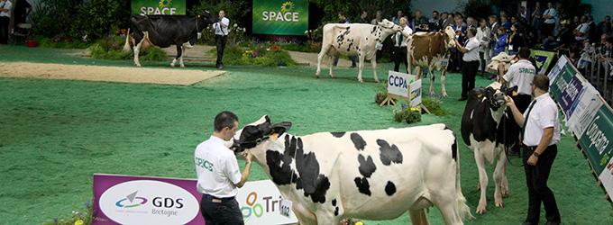 GDS Bretagne au SPACE 2017 : présentation de bovins