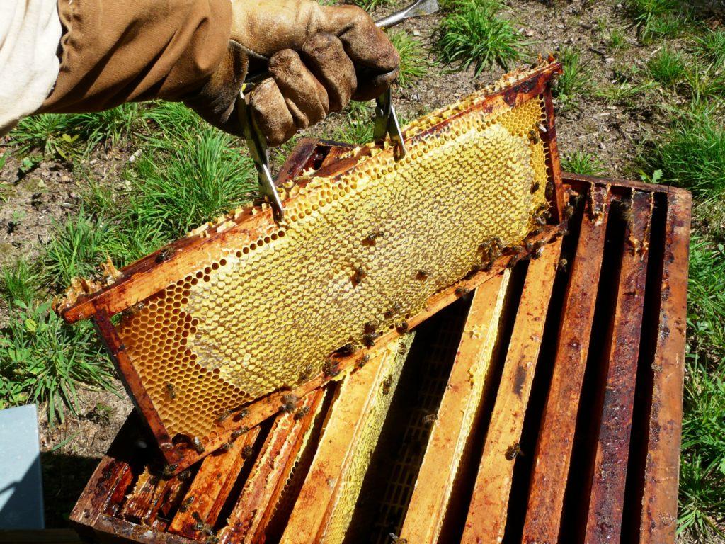abeilles et ruches