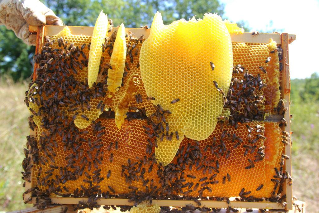 miel abeilles