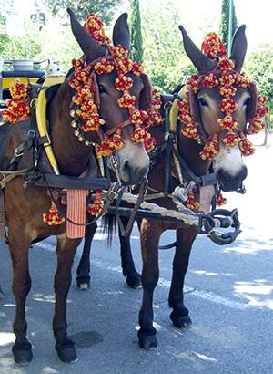 bodets chevaux Séville